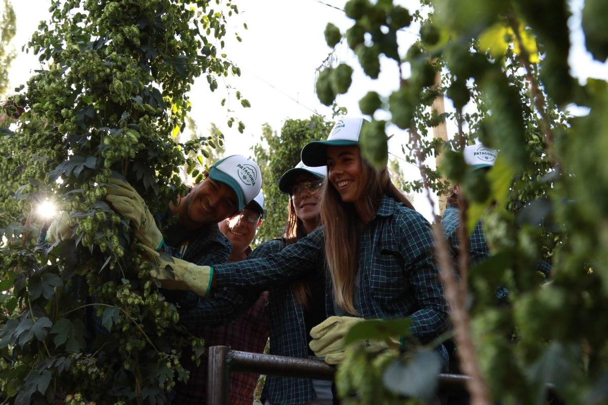 Clientes de Patagonia viajaron a Argentina para vivir el ritual de la cosecha de lúpulo