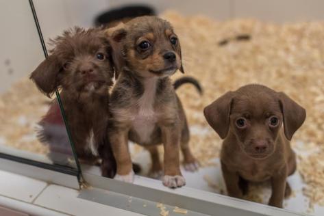 Cachorros Puppis.png