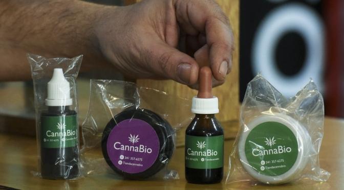 Kulfas destacó que la producción de cannabis medicinal generará 10.000 empleos y u$s500 millones